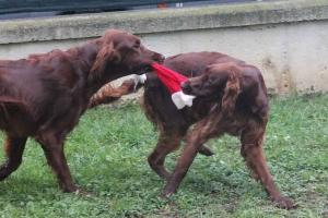 Christmas2012 062