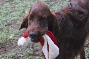 Christmas2012 084