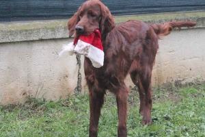 Christmas2012 091