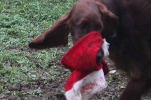 Christmas2012 114