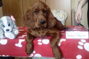 James Dean 1 16_05
