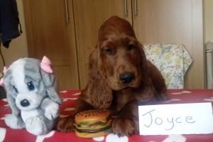 Joyce 16_05