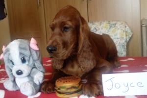 Joyce 2 16_05