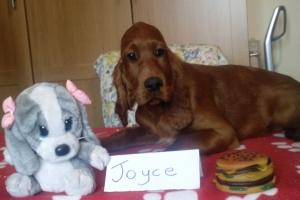 Joyce 6 16_05