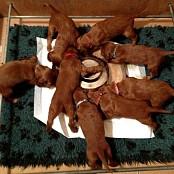 Puppies 028