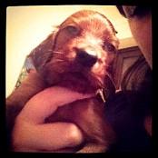 Puppies 029