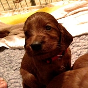 Puppies 040