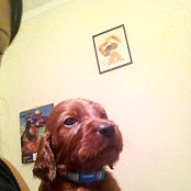 Puppies 086