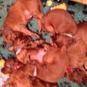 Puppies 089