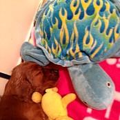 Puppies 090