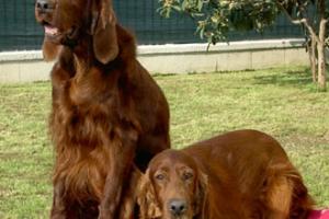 Puppy&Hingrid