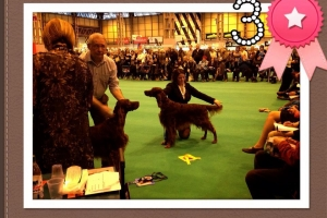 Stevie Crufts 13