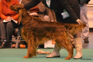 Stevie Crufts 2013