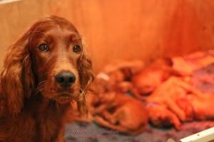 Jolie pups