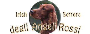 degliAngeliRossi – Irish Red Setters Kennel