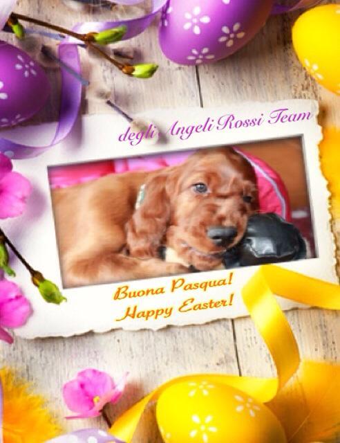 Buona Pasqua!     Happy Easter!