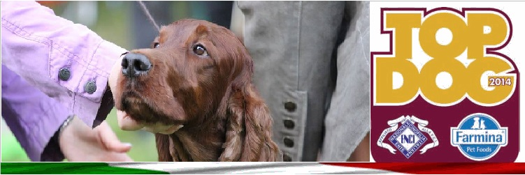 Top Irish Setter 2014
