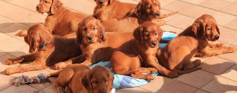 Cuccioli di 63 gg Disponibili